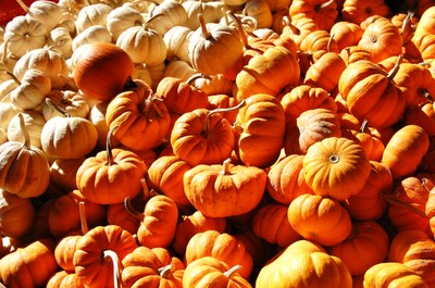 Pumpkin_field_trip_067