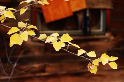 Desert_fall_colors_012